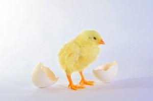 卵 栄養 白身 2