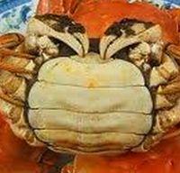 上海蟹 メス
